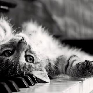 枕边音 夜的钢琴曲五(古风版)