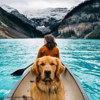 有只狗狗想跟你环游世界