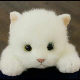 小白猫6661快乐