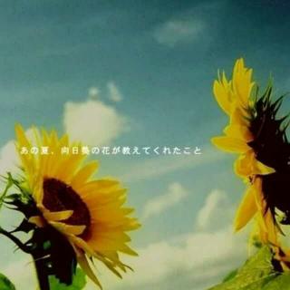 FLOWER - 太阳と向日葵