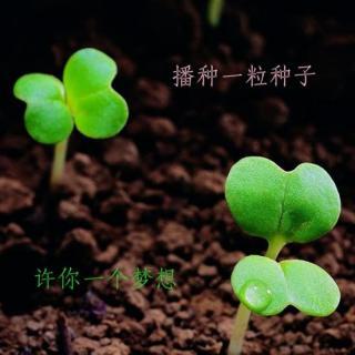 有梦就该勇敢去闯《爱梦想的小种子》----莫莫