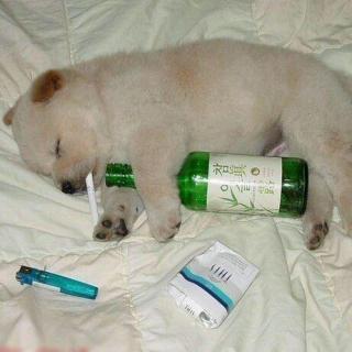 【脱口秀】喝醉酒后做过哪些搞笑的事?