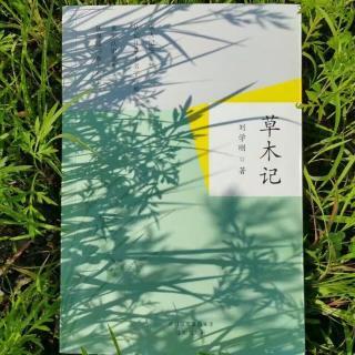 刘学刚原创《奔跑的香草》