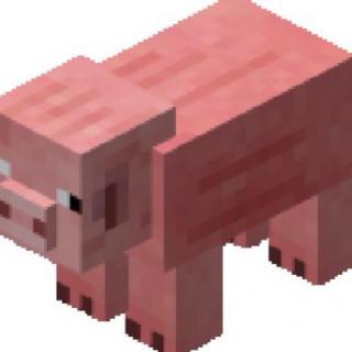 小猪指南。🐷