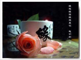 缘是人生最美的相逢 作者:春暖花开