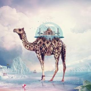 十万个为什么--骆驼为什么不怕风沙呢