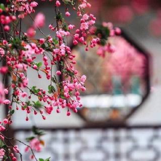 """清朝时期流行的""""打干儿""""是一种什么样的礼仪"""