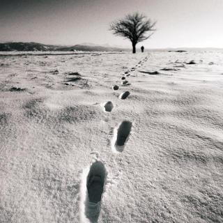 对话树才:一位诗人在自己的时代(上)