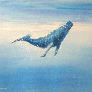 【睡前治愈】海里有一条最寂寞的鲸鱼,叫Alice