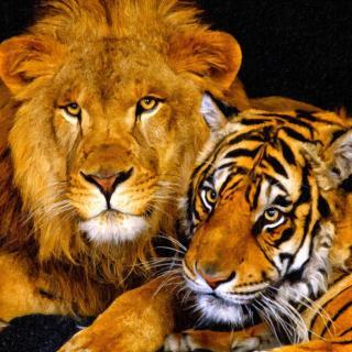 狮子与老虎谁是兽中之王?