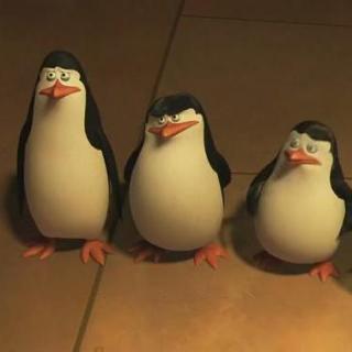 Penguins in Madagascar