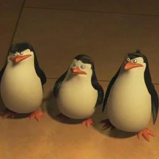 Penguins in Madasacar