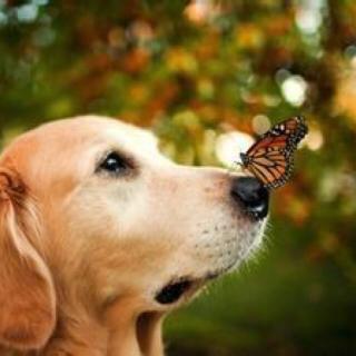 小野狗和小蝴蝶