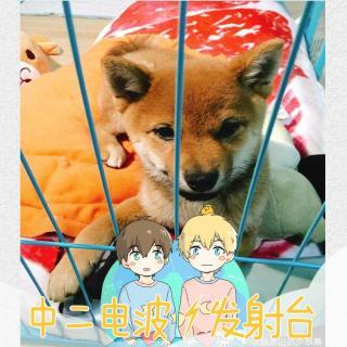 VOL.35 恭喜解锁宠物成就,获得:柴犬x1