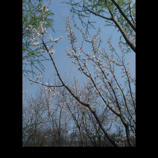 诗,你是人间的四月天
