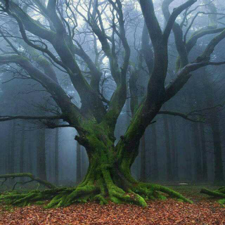 深度催眠轻音乐 - 大自然的声音之二