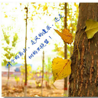 叶子的离去,是风的追求还是树的不挽留!