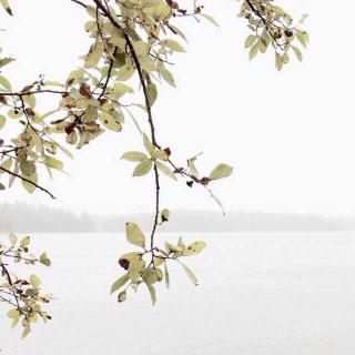 春日特辑•民谣的旋律写在春天的风里。