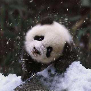 大雪纷飞寒冷初春夜 体验冰火两重天