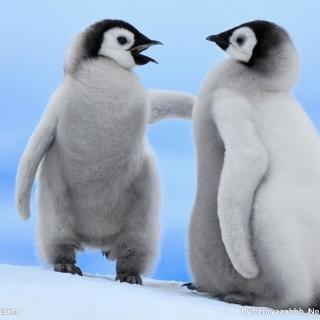 【睡前故事】冰箱里的企鹅