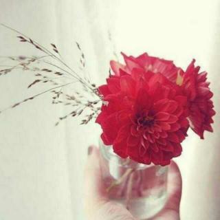 花开半日红