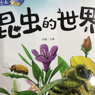 昆虫的世界-科学启蒙绘本
