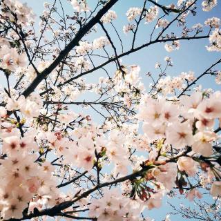 10.❁春眠❁ :《春天该很好.看花也看你》