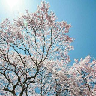 【韩语每日一句】世上没有可笑的梦想
