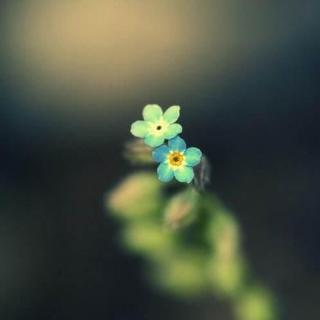 你在看孤独的风景,时光依旧