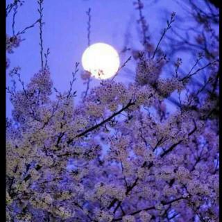 生活是煮一壶月光