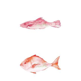 可可小食堂--家烧鳘鱼节