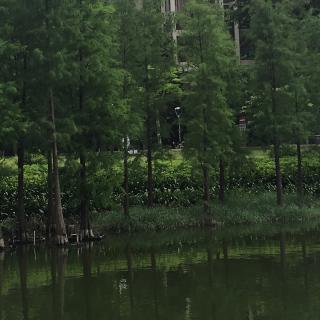 散文《行道树》作者:张晓风