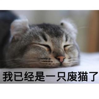 李~喵喵的日常 -- 起床啦