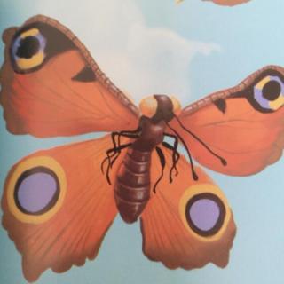 法布尔昆虫记:大孔雀蛾-为爱而生的天使
