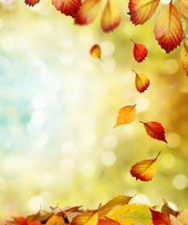 散文朗读 一片叶子落下来