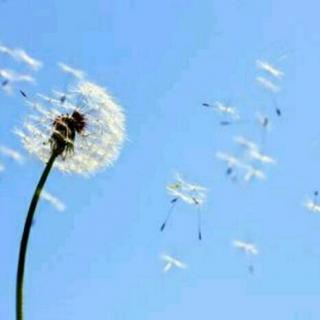 诗歌朗读|我不知道风——徐志摩