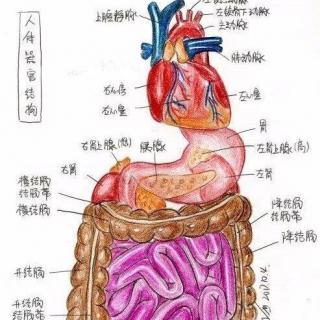 博雅小学堂【江南英格力士】教你数数身上的器官