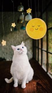 【クモオジサン】世界から猫が消えたなら-朗読