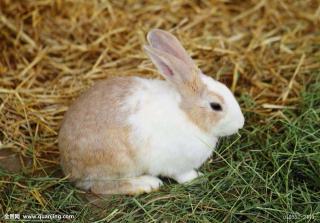 坏兔子的故事🐰