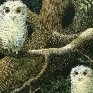 猫头鹰宝宝