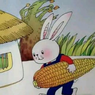金色玉米棒
