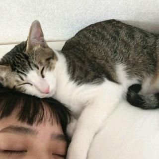 晚安  焦迈奇