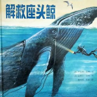 解救座头鲸🐳