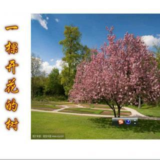 一棵开花的树/席慕蓉 诵读/小山后人