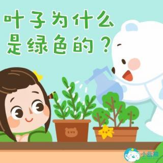 小云熊的十万个为什么——叶子为什么是绿色的
