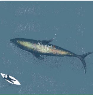 用心说 | 我是化身孤岛的鲸鱼
