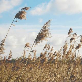 自然之声023 德彪西《平原的风》
