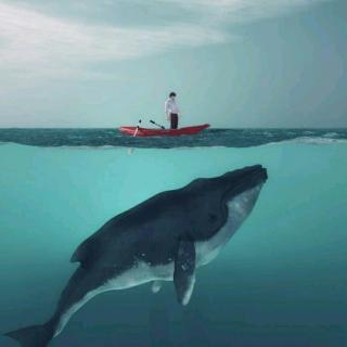 如鲸向海 如鸟投林