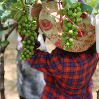 El camino de liberación de la pobreza y de desarrollo verde de la ciudad de Nanping