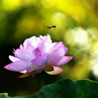 疗愈孤独冥想——释放被抛弃感与恐惧